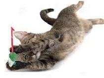 Katt som leker